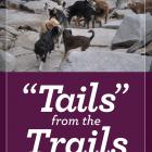 "Image of ""Tails"" from the Trails"